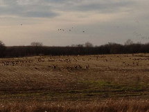 Hickory Creek Outfitters 03_Waterfowl-Hunting