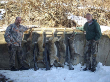 Hickory Creek Outfitters 04_Predators-Hunting-(Bobcat-and-Coyote)
