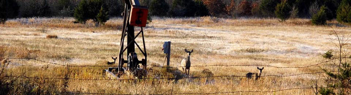 Whitetail deer on hickory creek outfitters hunting land in Kansas